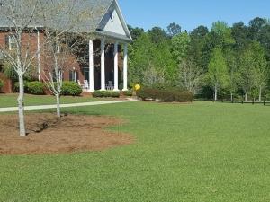 Weed Control & Lawn Fertilization in McDonough, GA